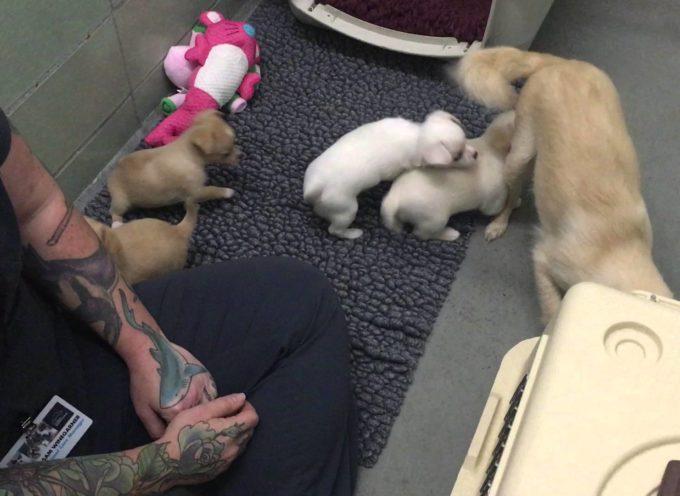 Non Ne Voleva Sapere Di Avvicinarsi All'uomo, Ma Quando Arrivano I Suoi Cuccioli Cambia Tutto![video]