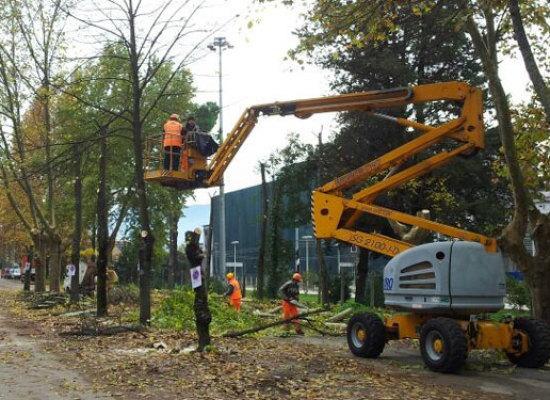 LUCCA, Manutenzione degli alberi