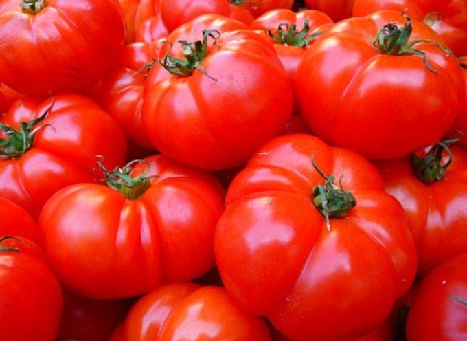 Boom di importazioni del pomodoro cinese. I dati sono allarmanti