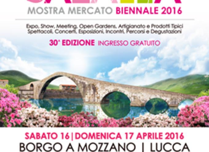 Da sabato 16 a domenica 17 aprile nel centro storico di Borgo a Mozzano – La Mostra Mercato Azalea