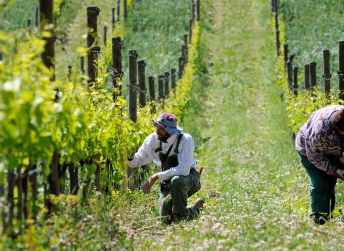 """Agricoltura: Miari Fulcis (Confagricoltura) """"Serve maggiore decisionismo per tutelare il settore agricolo toscano"""""""