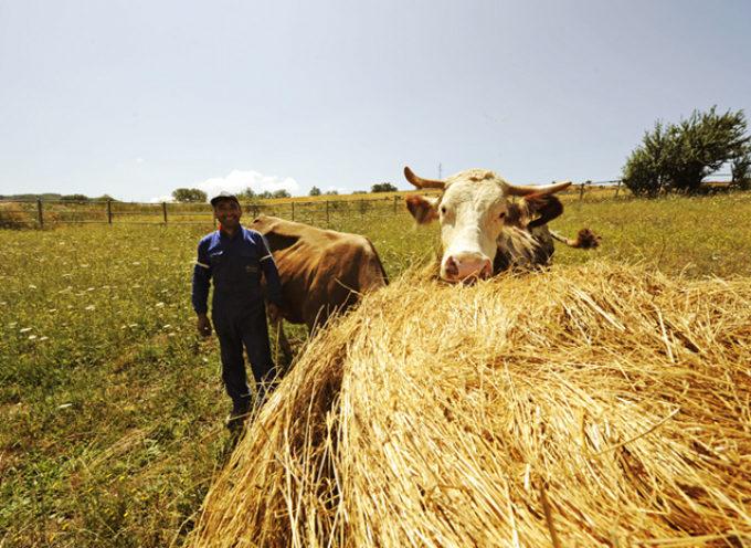 «Difendere l'agricoltura locale e la sovranità alimentare è un dovere di qualunque Stato nazionale.