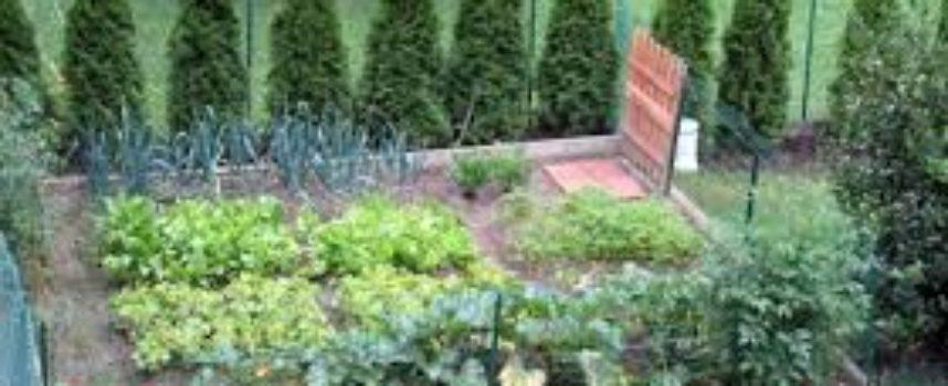 Fare l'orto in casa: 7 consigli per scegliere bene i semi