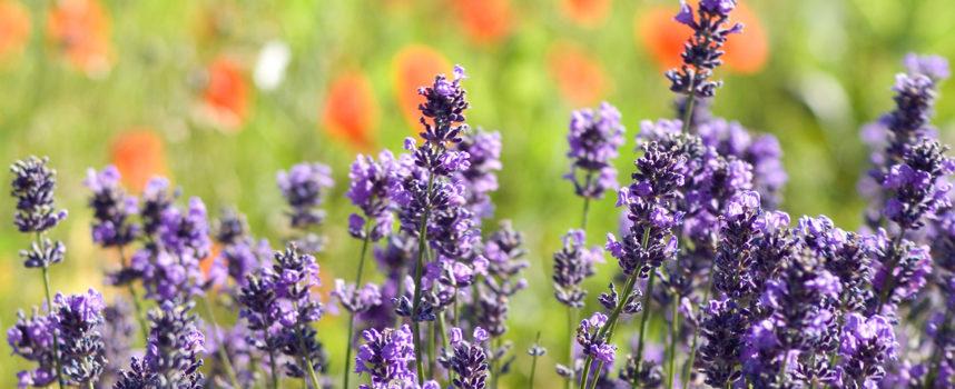 La via delle erbe e dei fiori a Massarosa: un percorso di rinascita