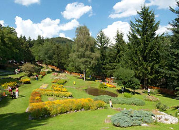 """Florovivaismo, Mati (Confagricoltura Toscana): """"Grazie al bonus, crescono gli investimenti su giardini privati"""""""