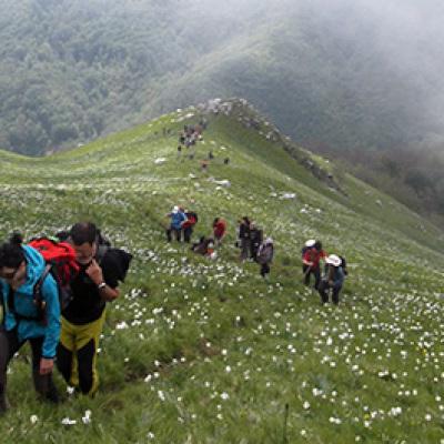 Un Tappeto di Fiori a 1400 metri – Con il Drone al Monte Croce – Alpi Apuane