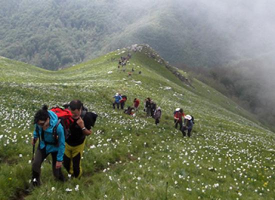 Wild Trails dedica l'escursione ad uno dei fenomeni naturali più suggestivi della nostra zona, la fioritura delle giunchiglie sul Monte Croce.