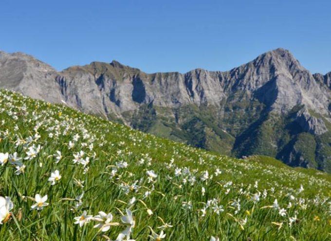 La straordinaria fioritura del Monte Croce