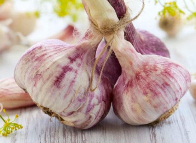 Mangiare l'aglio crudo: i benefici per l'organismo sono sorprendenti ed è anche antitumorale