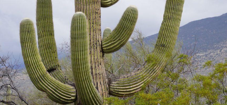Gli incredibili benefici per la salute di mangiare il Cactus