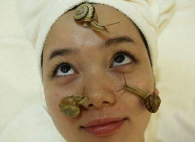 Bava di lumaca: le cose da sapere prima di storcere il naso!