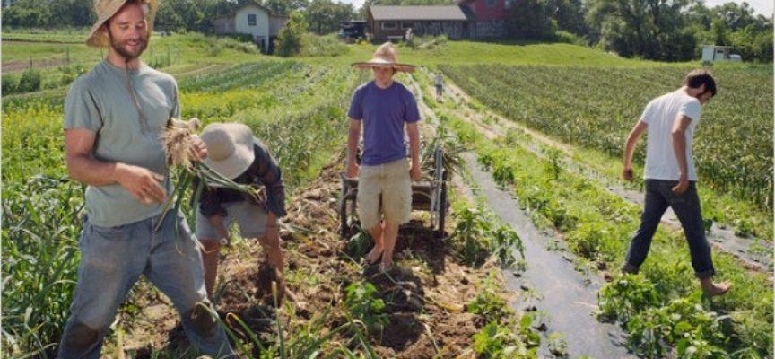 Agricoltura sociale: etica e sostenibilità ambientale, un nuovo modello di welfare