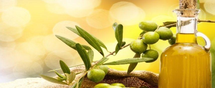 "Olio, Confagricoltura Toscana: ""Clima ottimale contro la mosca olearia"""