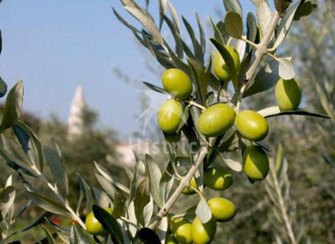 Viaggio nell'Italia dell'extravergine: la campagna olivicola 2020 regione per regione