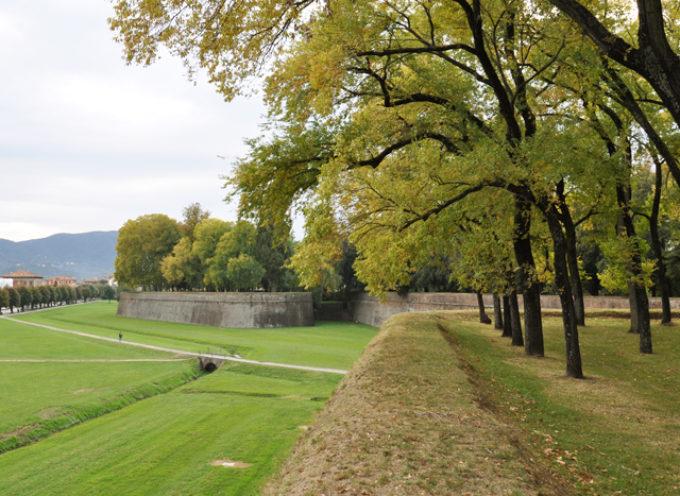 vengono rimossi, 6 alberi secchi fra il baluardo San Regolo e il baluardo Cairoli