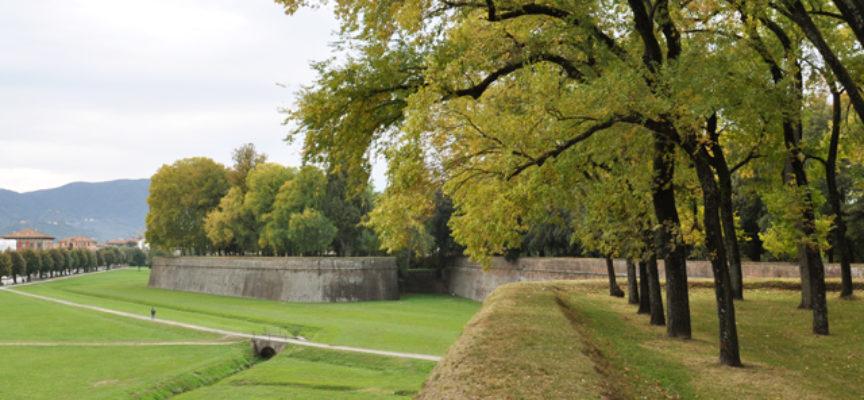 Tremila nuovi alberi in aree comunali: affidato all'Associazione Talea il progetto per la messa a dimora