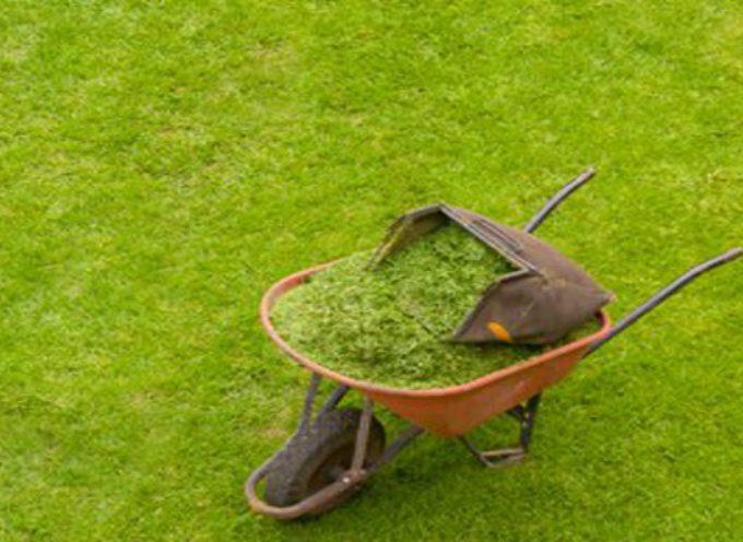 lucca – Cura del verde pubblico: l'amministrazione dà vita a un percorso di ascolto e partecipazione