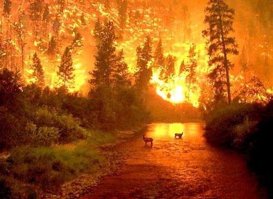 lucca –   rischio incendi nei boschi della lucchesia, a causa delle alte temperature