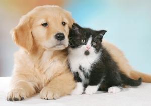 chilotorace-in-cani-e-gatti