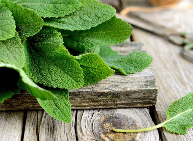Salvia: il rimedio naturale amico delle donne