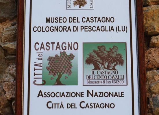 Colognora di Pescaglia – Il Museo del Castagno : DI IVANO STEFANI