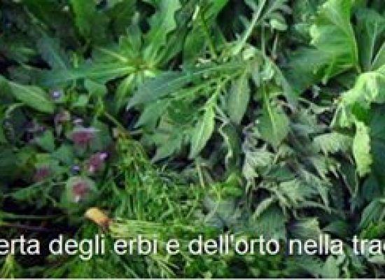 """""""La riscoperta degli erbi e dell'orto nella tradizione""""  A LUCCA"""
