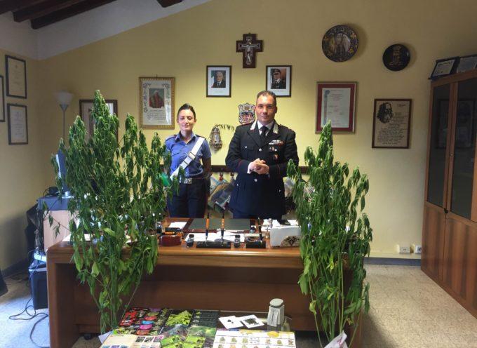 badia pozzeveri, i carabinieri travestiti da operai scovano una coltivazione di cannabis
