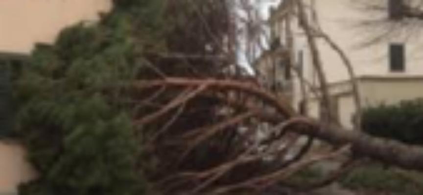 lucca – Nuove procedure per contributi ai privati per danni a seguito di eventi calamitosi