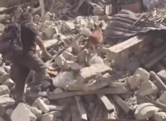 Terremoto: si scava, anche con l'aiuto dei cani