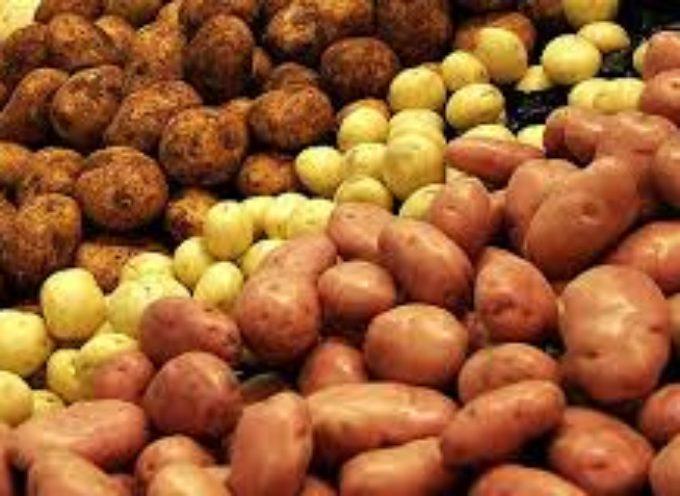Festa della Patata – Gragnana – Piazza al Serchio
