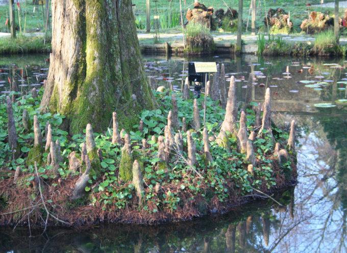 Pubblicato il bando di concorso pubblico per selezionare  il curatore dell'Orto Botanico di Lucca.
