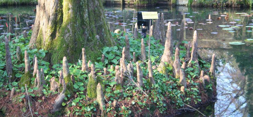 L'Orto Botanico incluso fra i beni comunali oggetto dell'ArtBonus:
