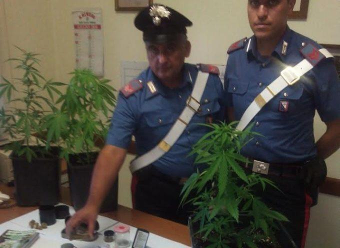 """pieve di compito – Notano delle """"strane"""" piante, era marijuana: in manette il coltivatore"""