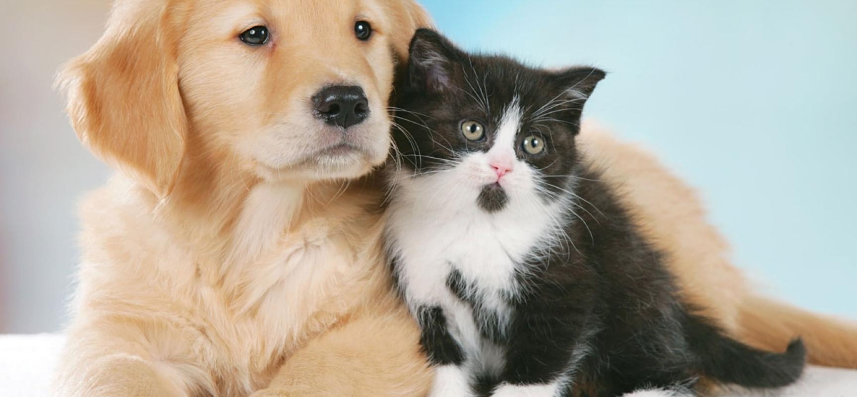 Risultati immagini per uda ufficio diritti animali