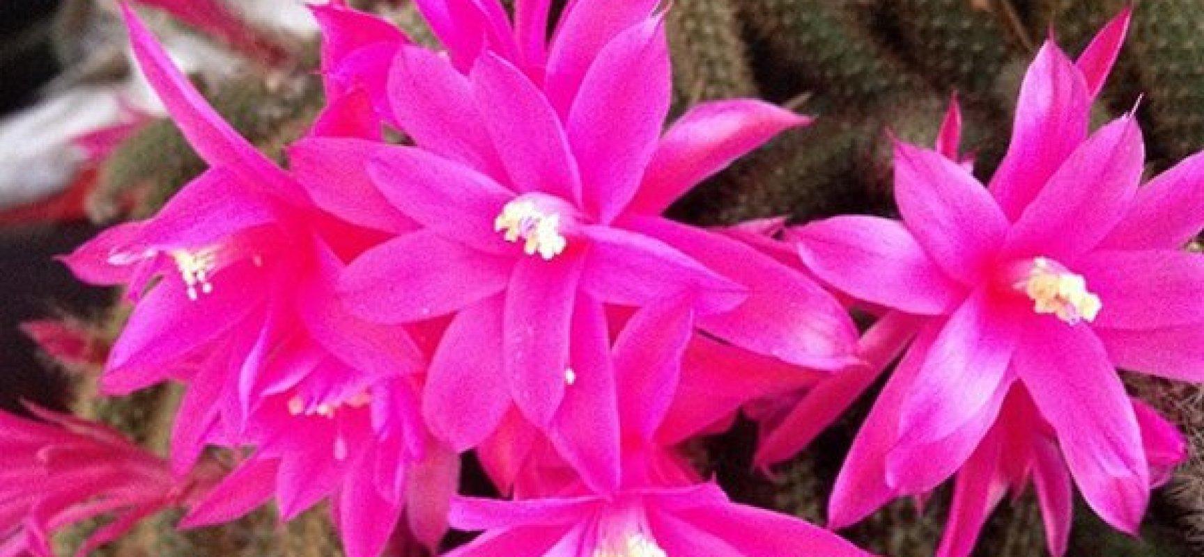 Piante grasse le variet pi belle di cactus da tenere in casa verde azzurro notizie - Le piante grasse si possono tenere in casa ...