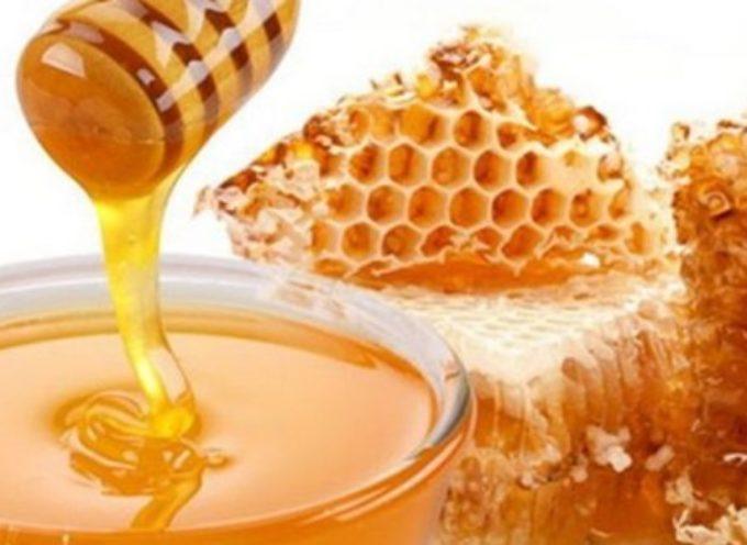 """Miele, Confagricoltura Toscana: """"La peggior produzione degli ultimi 50 anni"""""""