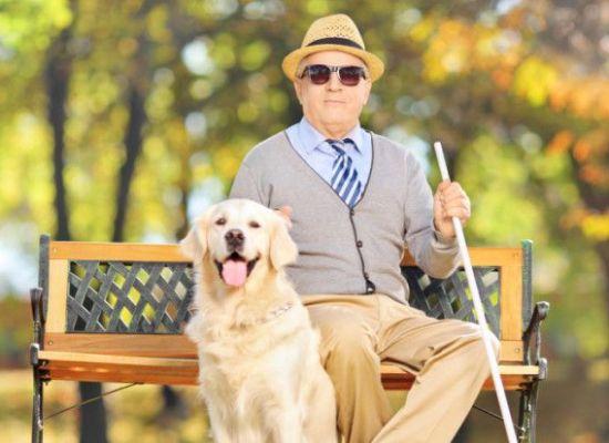 lucca – Domenica 16 ottobre si celebra la giornata dei cani guida