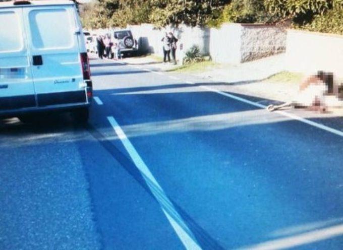 Pisa:Travolto da un furgone, cavallo muore sul colpo