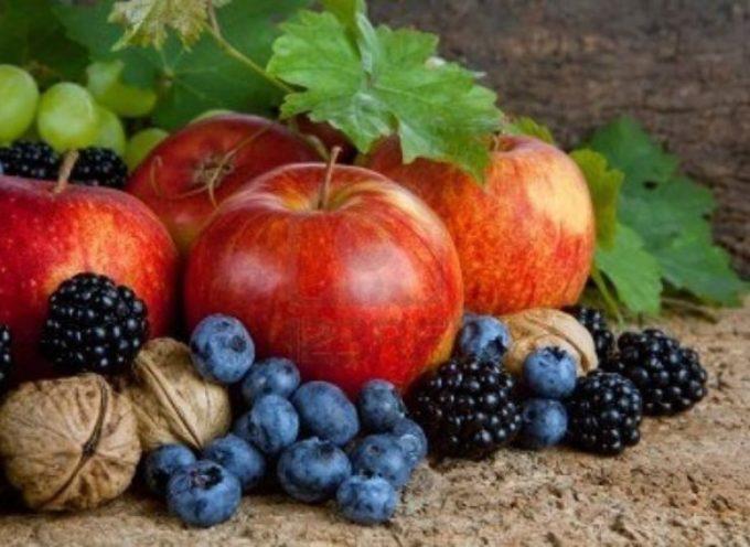 """Frutta: """"In Toscana la migliore produzione degli ultimi 10 anni"""""""