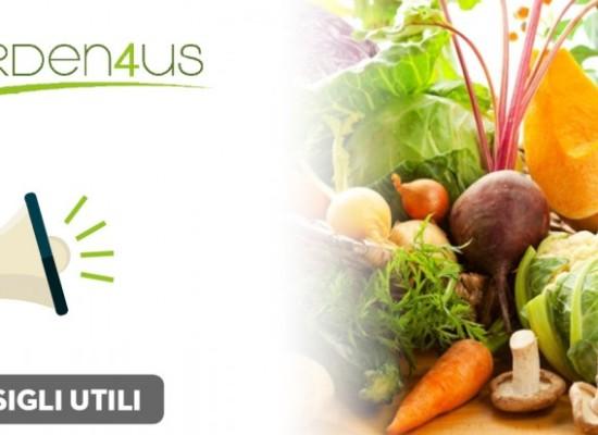 Verdura di stagione: cosa mangiare ad ottobre