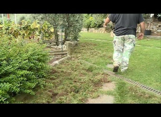 Danni dei cinghiali a Castelvecchio di Compito