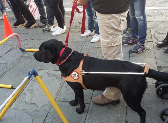 Lucca  si è celebrata la giornata dei ciechi e dei loro cani guida
