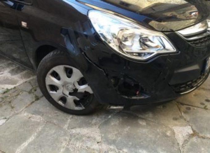 Cinghiale contro un'auto; danni per 1500 euro ma nessun risarcimento