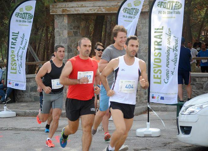 lucca – L'olivo come veicolo turistico – sportivo internazionale