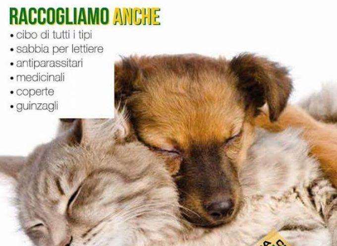 MONTECARLO RACCOLTA FONDI PER GLI ANIMALI