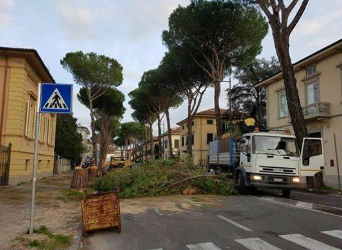 Taglio dei pini in viale Cadorna. Barsanti (CasaPound) critico: si sono studiate alternative?