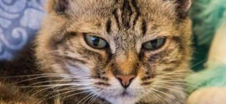 """lucca – non c'è pace per i gatti, spariti 60 mici: """"Potrebbero essere utilizzati per le messe nere"""""""