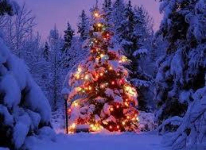 Per Natale scelgo il Larice!