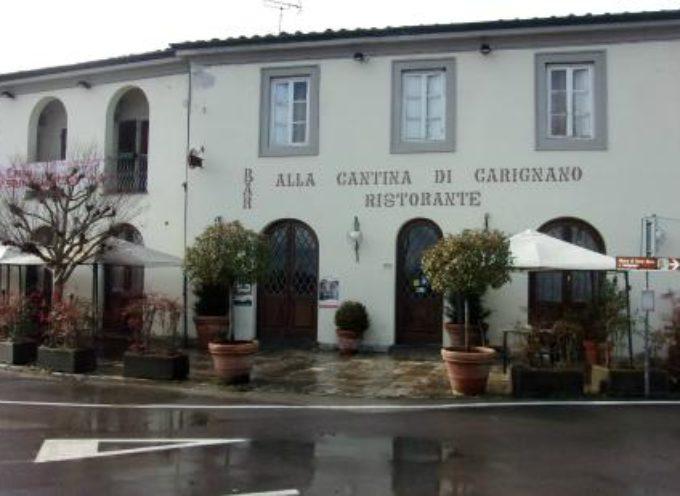 Ennesimo incidente causato dai cinghiali sulle strade del Comune di Lucca