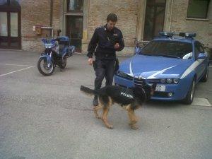 polizia-unità-cinofile